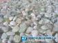 中国首家玉米石滤料